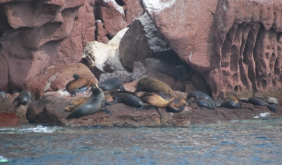 Sea Lion Rockery