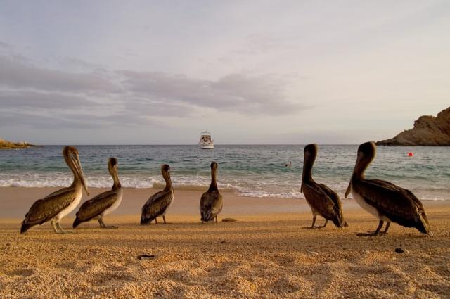 Bahia Santa Maria  (Photo from internet)